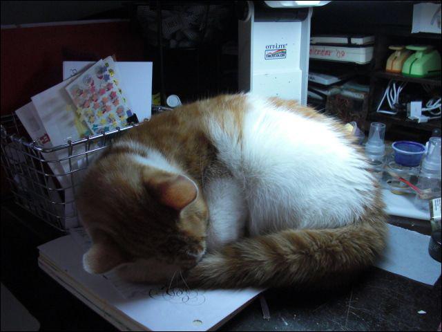 Moo curled up asleep_stroke