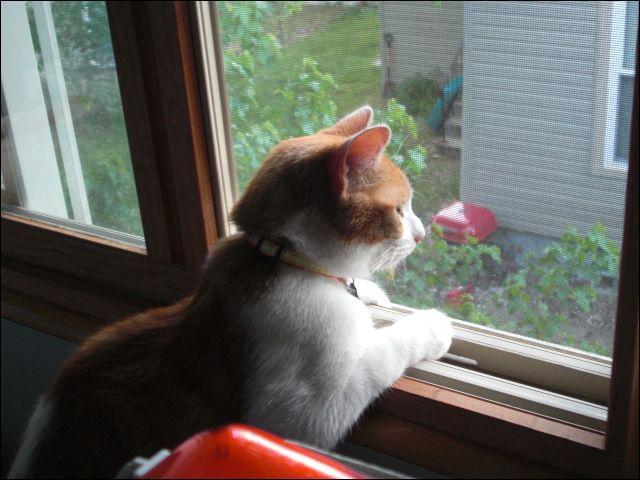 Moo in window_2