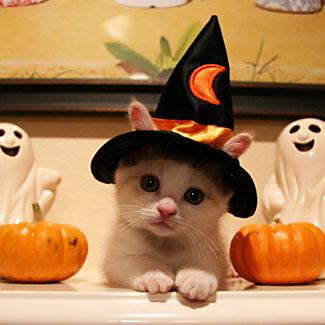Halloween_kitten